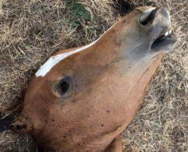 убийство лошадей