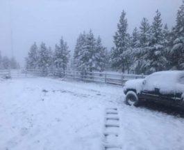 Альберта,снег,