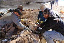 Морской хищник, которому 160 миллионов лет, был найден в самой засушливой пустыне мира