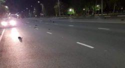Десятки ворон упали замертво с неба в Балаково Саратовской области — 5G?