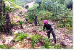 По меньшей мере 11 человек погибли в результате оползней, вызванных проливными дождями в Северном Калимантане, Индонезия.