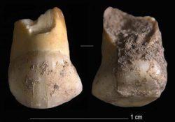 48000-летний зуб последних неандертальцев обнаружен в Италии