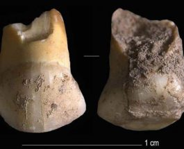 Италия,зуб,неандертальцы,