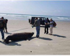 Мексика,Морские львы,гибель,