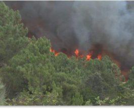 Португалия,лесные пожары,