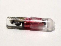 Будут чипировать людей. Инъекционный биочип для обнаружения SARS-CoV-2 близок к разрешению FDA