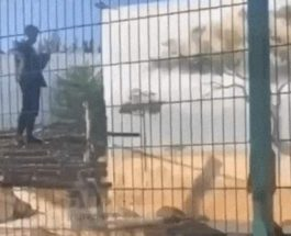 зоопарк украина