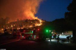 В Калифорнии эвакуируют винодельческий регион Напа из-за лесных пожаров (17 ФОТО)