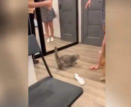 кот вечеринка