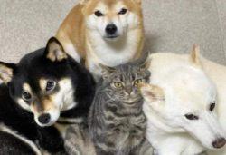 Кошка, которая считает себя собакой, стала звездой Интернета (12 ФОТО)