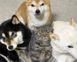 кошка,собаки,фото,животные,кошка и собаки,