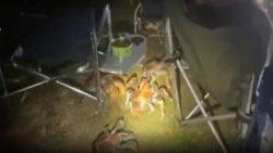 Десятки гигантских крабов вторглись в лагерь семьи в поисках еды после запаха барбекю. Ужасающие кадры показывают, что около пятидесяти голодных ракообразных роятся в их лагере на острове Рождества в Австралии.