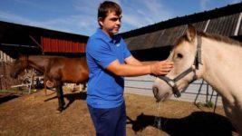 лошади франция
