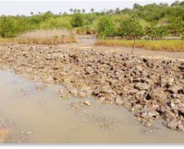 наводнения,Гвинея,