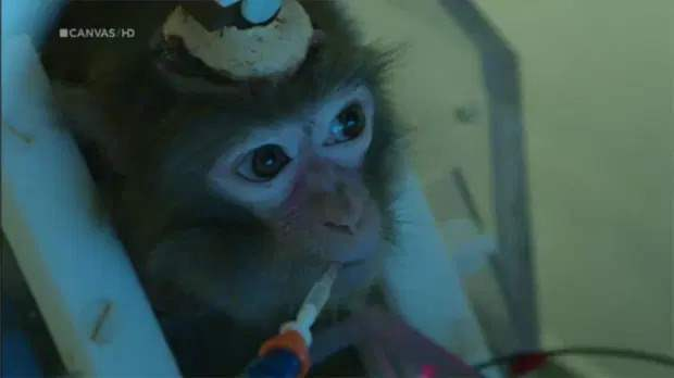 обезьяны эксперименты