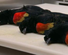 птицы,гибель птиц,