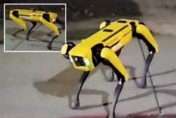 Робот-пес бродит по улицам канадского города (ВИДЕО)
