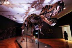 Один из самых больших скелетов тираннозавра выставлен на торги Christie's