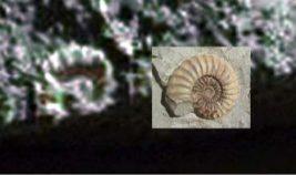 марс,ракообразное,окаменелость,ракушка,вода,