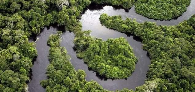 Амазонка,тропические леса,