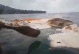 Индонезия,море,туша,существо,