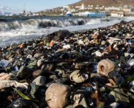 Озерновский,экологическая катастрофа,гибель,