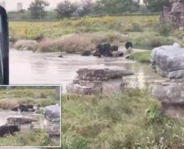 Шанхайский парк дикой природы,сотрудник, Шанхай,