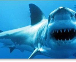акула, украинский турист, Египет,