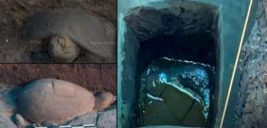 археология.черепаха,кварц,радиопередатчик,бронза,