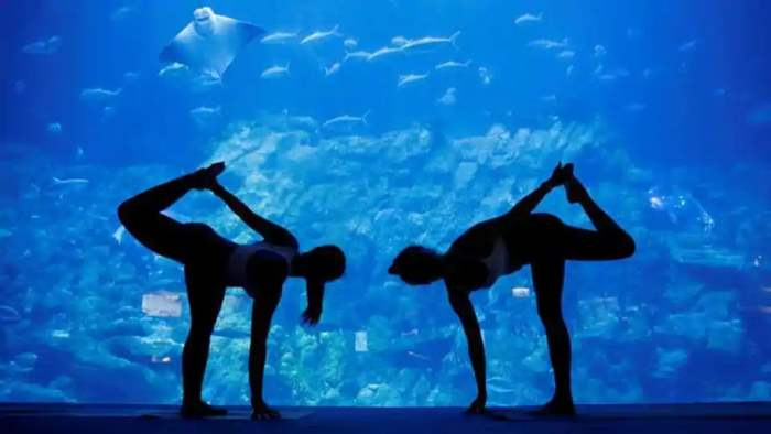 йога акулы