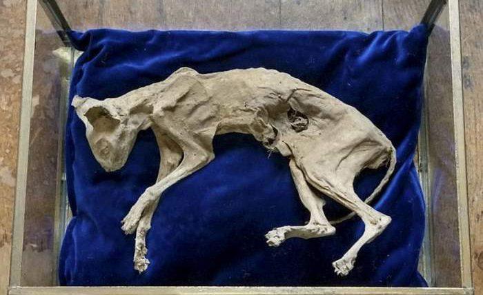кот,мумия,мумифицированный кот,