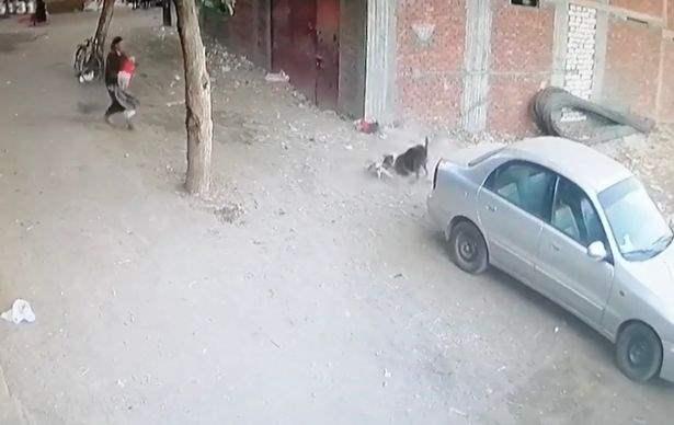 кот,собака,мальчик,Бразилия,
