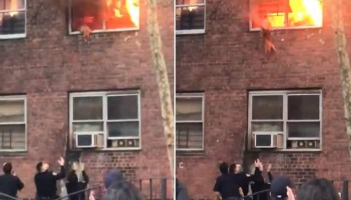 кот, окно, пожар, спасение,