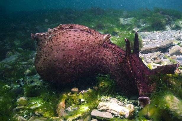 морское существо,вымыло берег,