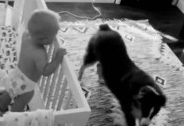 собака,ребенок,ясли,