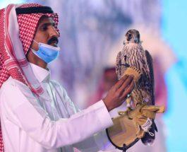 сокол,Саудовская аравия,птицы,