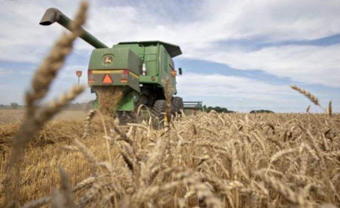 урожай, дефицит, пшеница,
