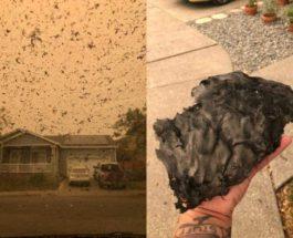 пепел,Калифорния,пожары,