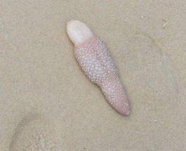 Австралия, берег, существо, Морское перо,