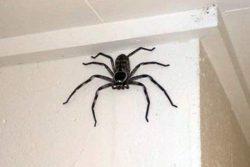 Австралиец сфотографировал дома гигантского паука