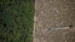 Что произойдет, если мы вырубим тропический лес Амазонки?