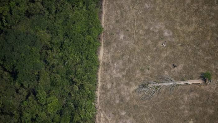 Амазонка,леса,вырубка лесов,виды,