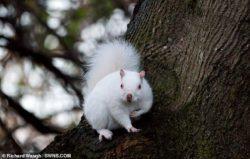 Редкая белка-альбинос сфотографирована в Шотландии (ФОТО)