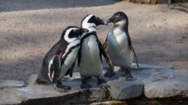 Великобритания, пингвины, смотритель зоопарка,