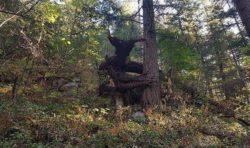 «Рогатое чудище» под Винницей пугает грибников