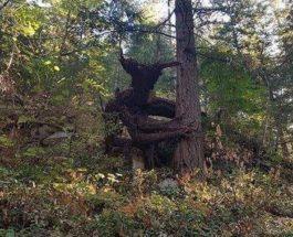Винница, лес, рогатое чудовище,дерево,