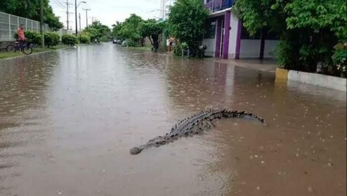 Мексика, крокодилы,
