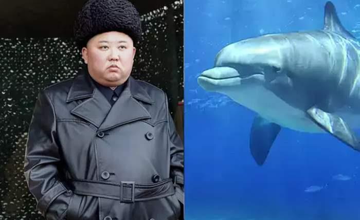 Северная Корея, КНДР, дельфины,