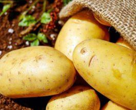 Франция, картофель,