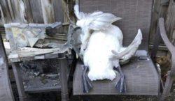 Огромный град убил десятки лебедей и гусей в Юте (видео)